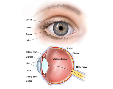 Affordable Intraocular Melanoma Treatment in India | Low